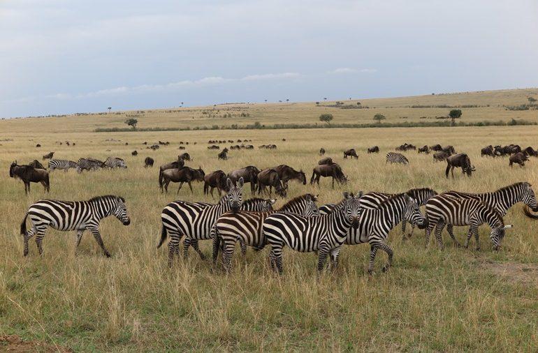 kenya - Kenya-Kapak.jpg