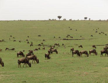 kenya - kenya-Masai-Mara-Kapak.jpg