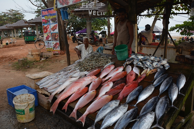 srilanka - Fish-Point.jpg