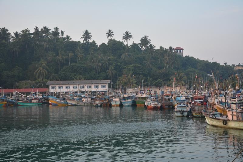 srilanka - Mirissa-Balina-turu-1.jpg