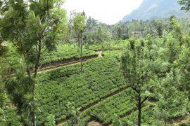 srilanka - Nuwara-Eliya-kapak.jpg